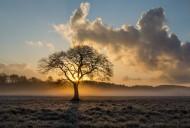 一棵孤独的树图片(10张)