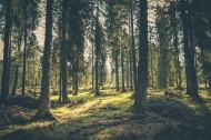 茂密的森林图片(15张)
