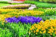 美丽的花海图片(8张)