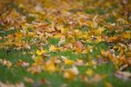 秋天落叶风景图片(14张)