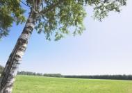 草地与大树的图片(19张)