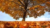 一棵孤零零的树图片(10张)