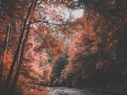 秋天树林风景图片(14张)