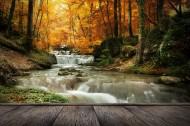 林中木桥边溪流景色图片(7张)