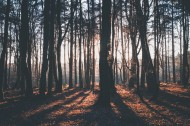 清晨的树林图片(16张)
