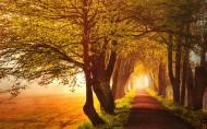 秋天的森林图片(11张)