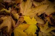 秋季落叶风景图片(12张)