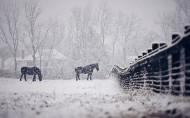 大雪纷飞的冬季美景图片(15张)
