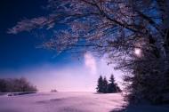 树上的积雪图片(10张)