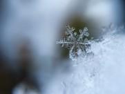 晶莹的雪花图片(16张)
