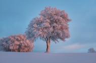 堆满树枝的白雪图片(10张)