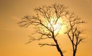 一棵干枯的树图片(10张)