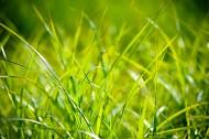 绿油油的草丛图片(12张)
