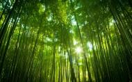 美丽的树木丛林图片(14张)