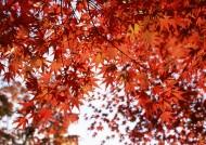 美美的枫叶图片(14张)