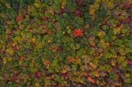 秋天的森林图片(16张)