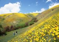 人与绿色大自然图片(55张)