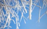 冬日冰冷的雾凇图片(21张)