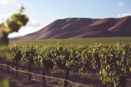 美丽的葡萄庄园图片(12张)