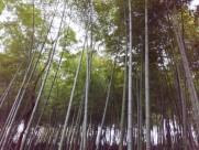 郁郁葱葱的竹林图片(10张)