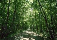 阳光树林图片(39张)