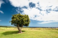 一棵独自生长的树图片(11张)