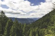 针叶树森林图片(15张)