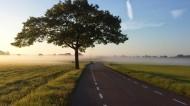 远处的树图片(12张)
