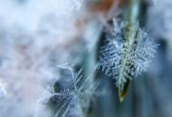 皎洁的雪花图片(12张)