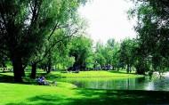 茂盛的树图片(20张)