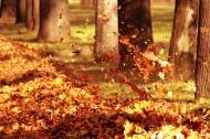秋日美景风景图片(14张)