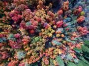 森林俯瞰图片(18张)