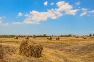 田野上空的蓝天白云图片(10张)