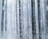 雪中树木图片(20张)