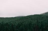 一片茂盛的森林图片(14张)