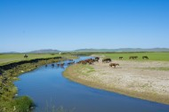 唯美的草原蓝色天空图片(11张)