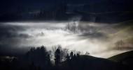 雾天的森林图片(14张)