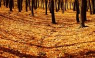 金秋森林图片(8张)