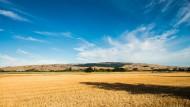 风吹麦浪风景图片(14张)