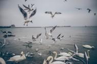 海边的风景图片(10张)