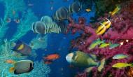 海底风景图片(8张)