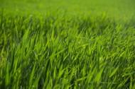 夏季绿色的草地图片(14张)