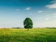 草原上的一棵树图片(10张)