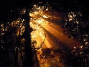 阳光下的树林图片(28张)