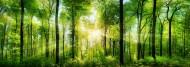 树林景色图片(12张)