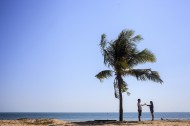 一棵孤独的椰树图片(10张)