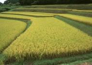 水稻稻田图片(38张)