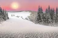 雪林风景图片(13张)