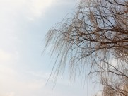 干枯的树枝图片(10张)