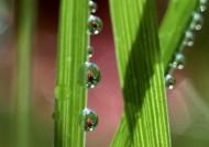 植物上的露珠图片(12张)